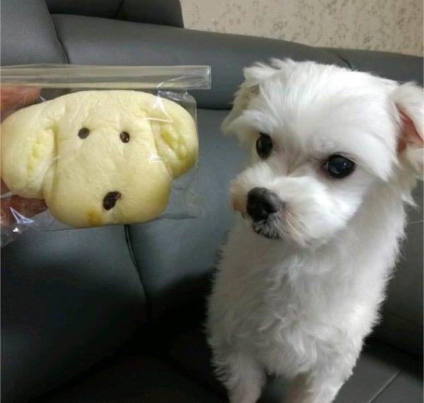 Собака Чонгука