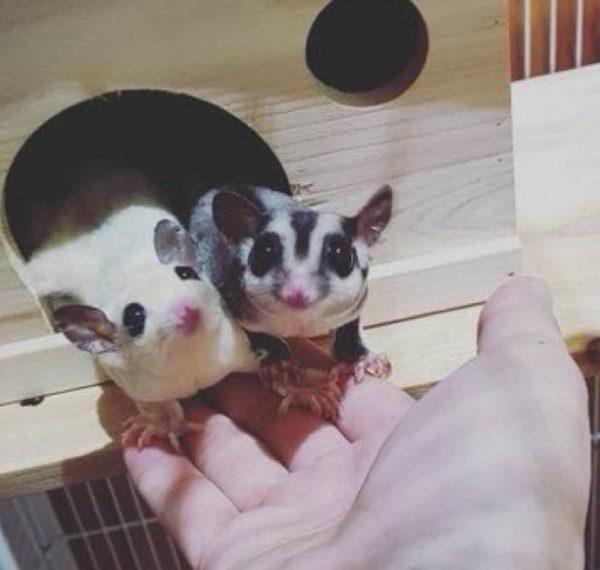 Животные Джина из БТС