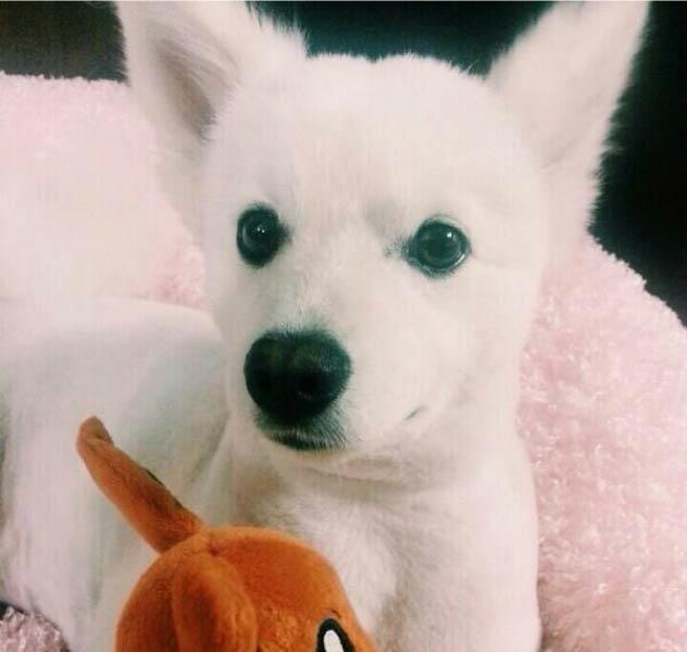 Собака Намджуна
