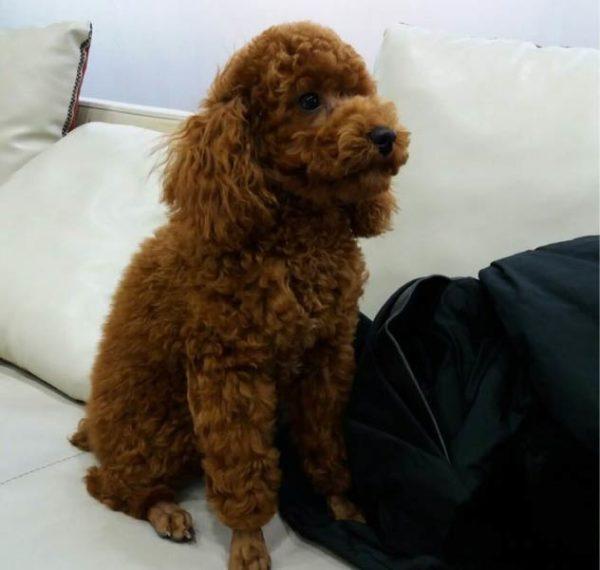 Собака Юнги